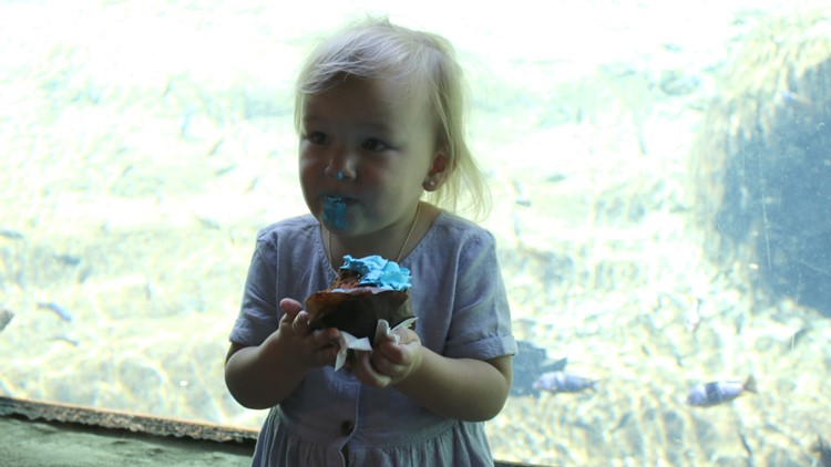 Zoo hippo birthday cupcakes