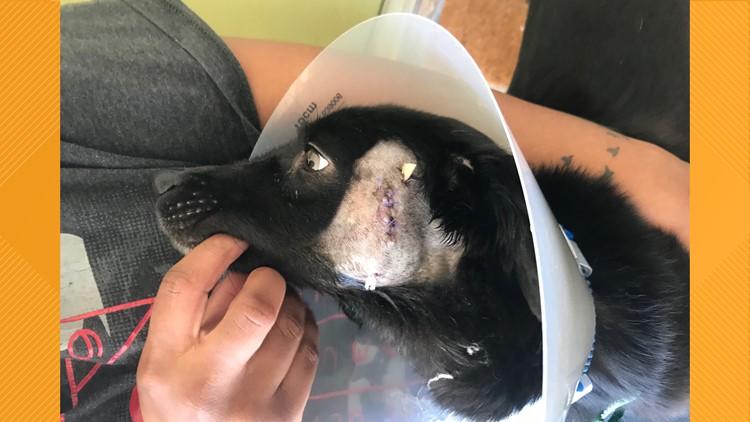 Animal cruelty dog