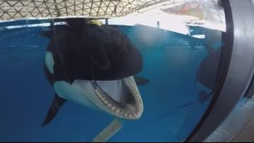 Inside SeaWorld San Antonio | New To Town