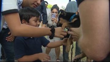 Julian Castro tours Animal Defense League, unveils proposal to protect animals