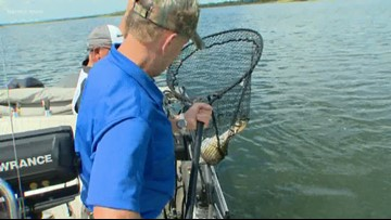 Texas Outdoors: Redtail fishing