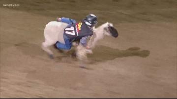 Young SA cowpoke wins Mutton Bustin' crown