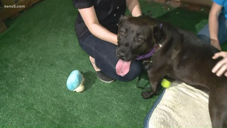 This 2-year-old dog is available for adoption!