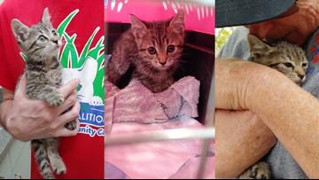 Kitten rescued from under bridge