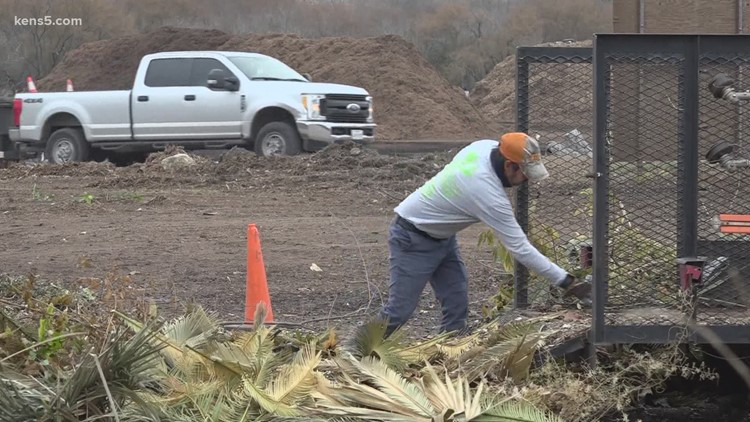 Cleaning up dead landscaping after this month's historic Texas cold