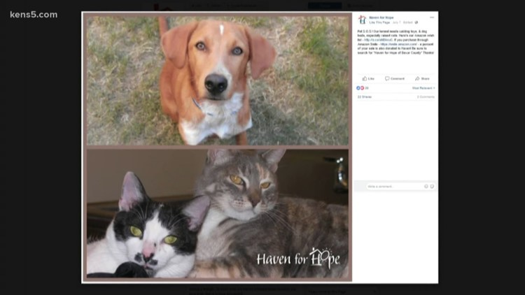 kens5.com | Haven for Hope\'s pet S.O.S.