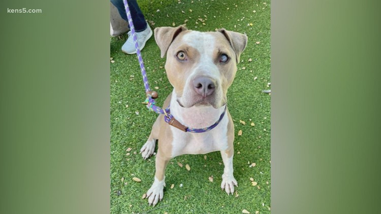 Give Aladdin, a rescue dog, a 'whole new world' | KENS Cares 🐶