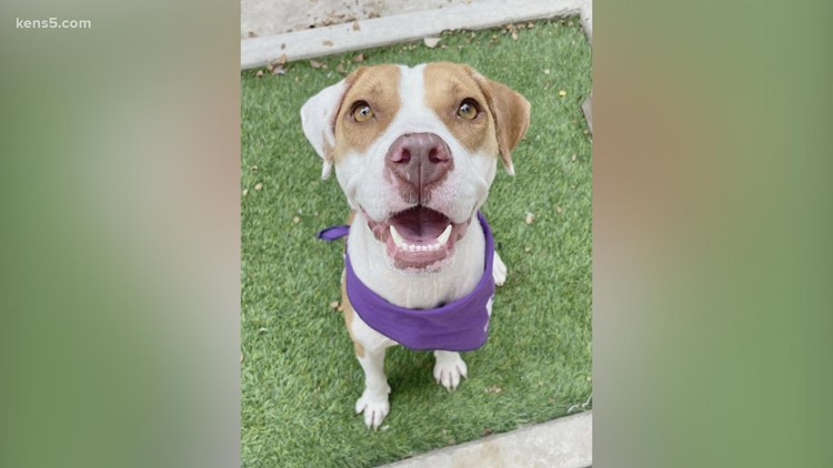 Meet Nebula, our pet of the week   KENS Cares