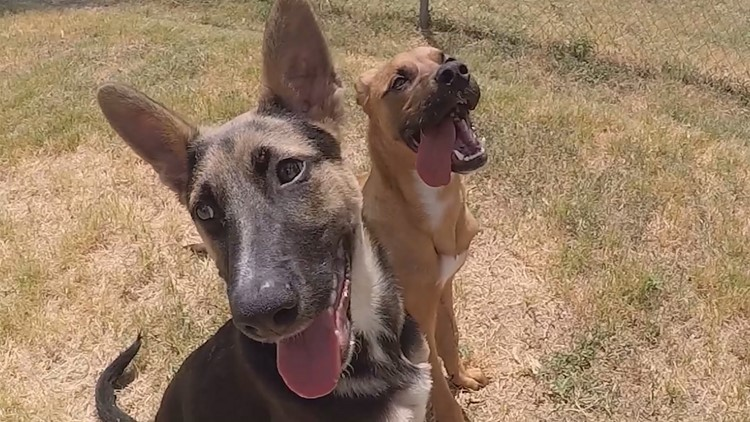 Injured puppies who became friends at shelter are looking for forever home to adopt them both