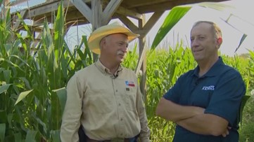 The cornfield in Hondo is a-Maize-ing! | Texas Outdoors