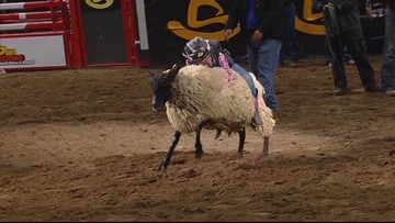 Colorado girl wins Wednesday's Mutton Bustin' competition