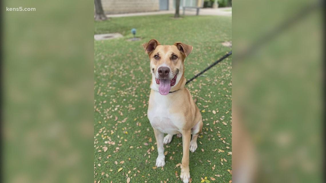 Half off pet adoptions through Saturday | KENS Cares