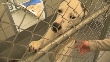 Shelter dogs will have new homes with veterans