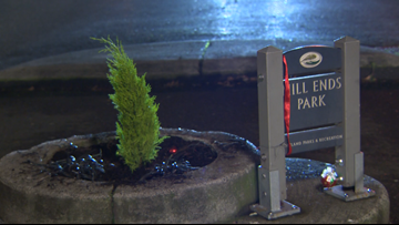 Tree replaced at world's smallest park after vandal cut it down