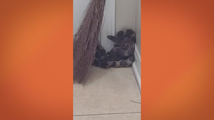 Watch: Woman says snake jumped into her home when she went to check on noise at her front door