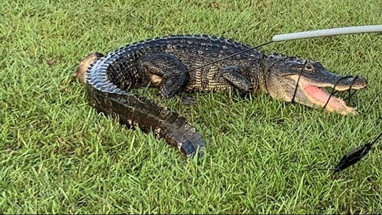 Surprise! Gator found at Houston-area high school