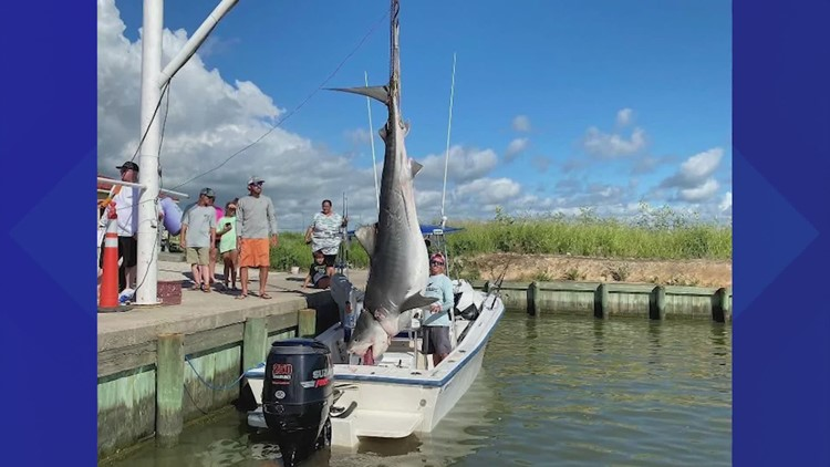 'I was shaking. I couldn't believe it'   Texas City fisherman reels in 12-foot, 1,000-pound tiger shark