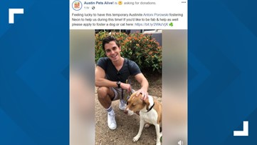 Queer Eye's Antoni Porowski fosters dog from Austin Pets Alive!