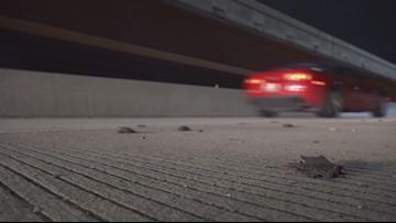 Dozens of bats run over, killed on I-35 off-ramp