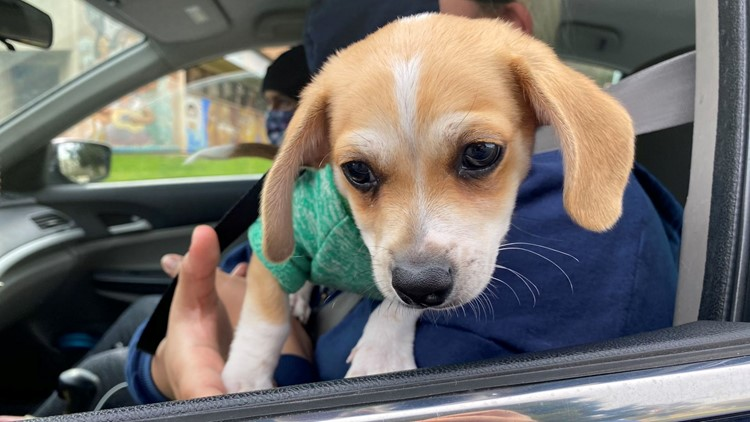 Austin Animal Center adoptions double this weekend as shelter reopens; still in urgent need of help