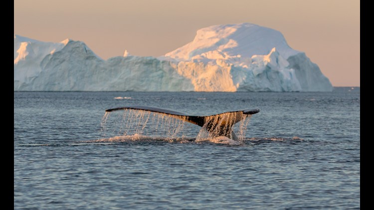 April and May are some of the best months for whale sighting opportunities in Alaska. (Photo by Vadim Petrakov/Shutterstock)