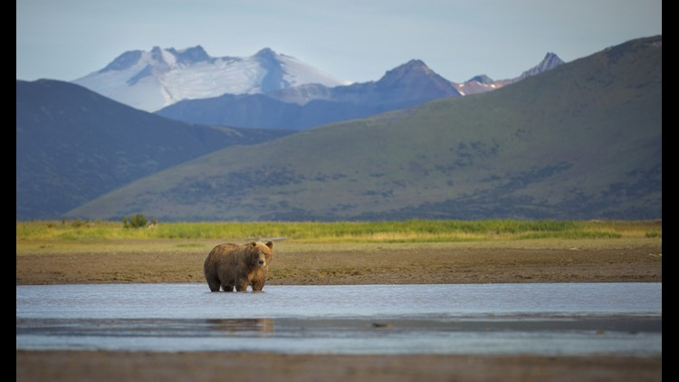 Glacier Bay National Park is a hot spot for seeing wildlife from the comfort of a cruise ship. Common wildlife spottings include bear, mountain goats, puffins, whales and more. (Photo by Chase Dekker/Shutterstock)