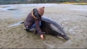 Shocking Footage Shows Citizens Helping Two Dolphins That Got Stranded Over 600 Feet From Shore