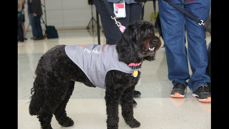 Therapeutic dogs at D/FW