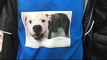 Judge gives Chunk the pitbull a second chance