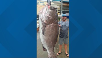 'A big old fish!': 350-pound grouper caught in Southwest Florida
