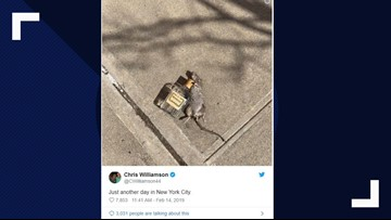 Rat seen living the high life in the Big Apple
