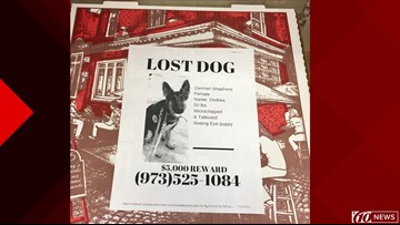 Pizzerias putting missing pet flyers on boxes of pizza