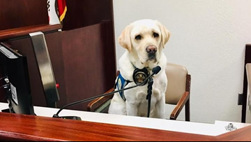 This heroic dog helped the abused California children face their parents in court