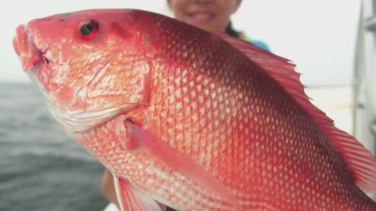 Red Snapper season officially underway, app helps you track what you catch